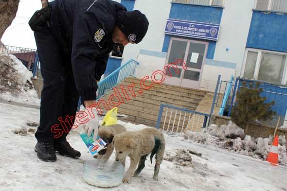 Polisler süt verdi köpek daha önce polislerin yine sokakta bularak